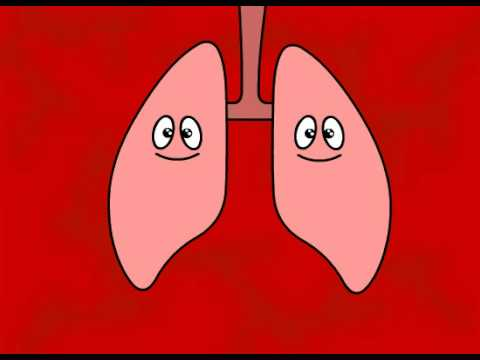 Flash Video - Smoking Harms Your Body