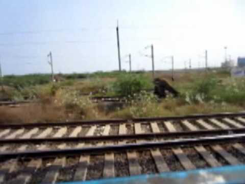Forex near medavakkam