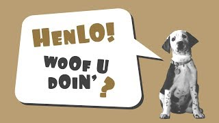 Meet The World's Cutest Puppy | Funny Animal Videos | DogExplorer.com