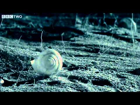 Small Spider Lifts Snail Shell Up Tree - Madagascar - BBC Two