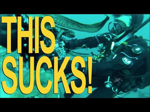 Octopus Attack Scuba Diver Angry Octopus Attacks Diver 39 s