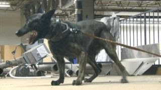 Protecting K-9 units from accidental overdose