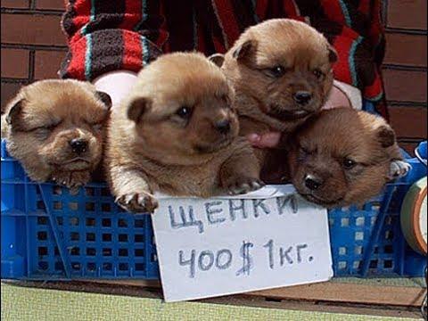 Собачий рынок Одесса. Разные породы собак. Продажа собак и кошек. Топ 5 собак, птичий рынок наш