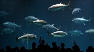 The ocean's falling oxygen levels are putting fish species at risk: report