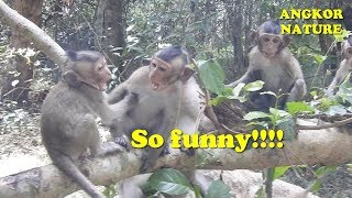Cute baby wild monkeys play fun, funny video with baby monkey | Angkor Nature