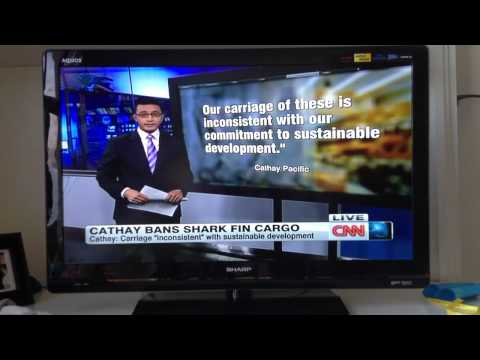 CNN : Cathay Pacific Shark Fin Ban