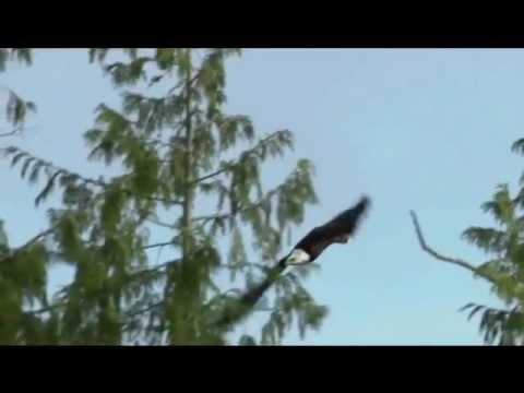 Andhra Christava Keerthanalu Eelatidha Yesu Prema video