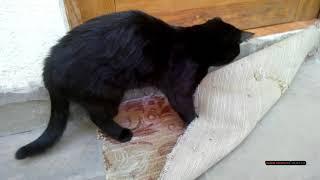 Юность кота Григория. Смешные животные. Youth cat Gregory. Funny animals