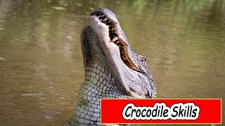 Animals Documentary - Crocodile Documentary - Crocodile Documentary National Geographic