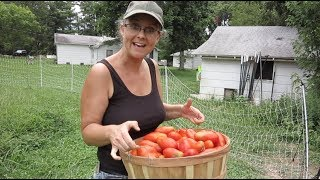 Nothing Can STOP these TOMATOES!!! Plus, a visit from White House on the Hill