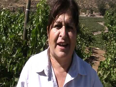 Laura Zamora enológa de Bodegas de Santo Tomás