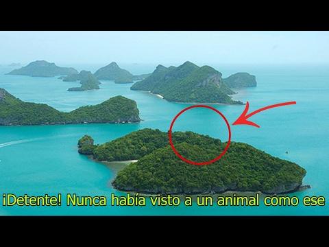 En esta Isla Habitan las Criaturas más Extrañas del Mundo (Se dice que son Extraterrestres)