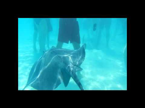 stingray city and barrier reef snorkeling tour through Royal Caribbean