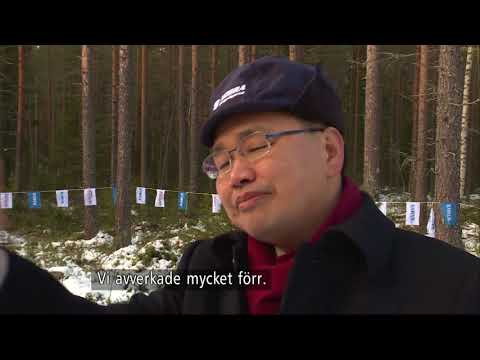Kina lär sig skog i Sverige - Nyheterna (TV4)