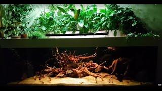 Интерактивный аквариумный туризм Сезон 3 Выпуск 3(Эталонный аквариум с Южной Америкой)