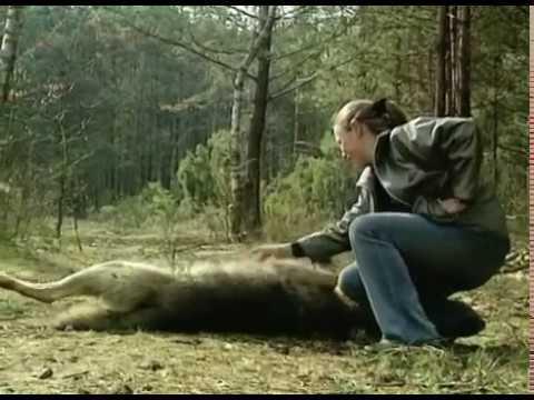 Кому нужен волк? Who needs a wolf?