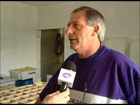 TV UP / UP NOTÍCIAS - Conheça a Produção de Cogumelos (09/09/2013)