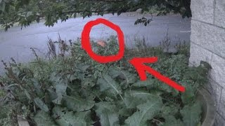 Real Fairy Caught on Tape (Amazing Footage!)