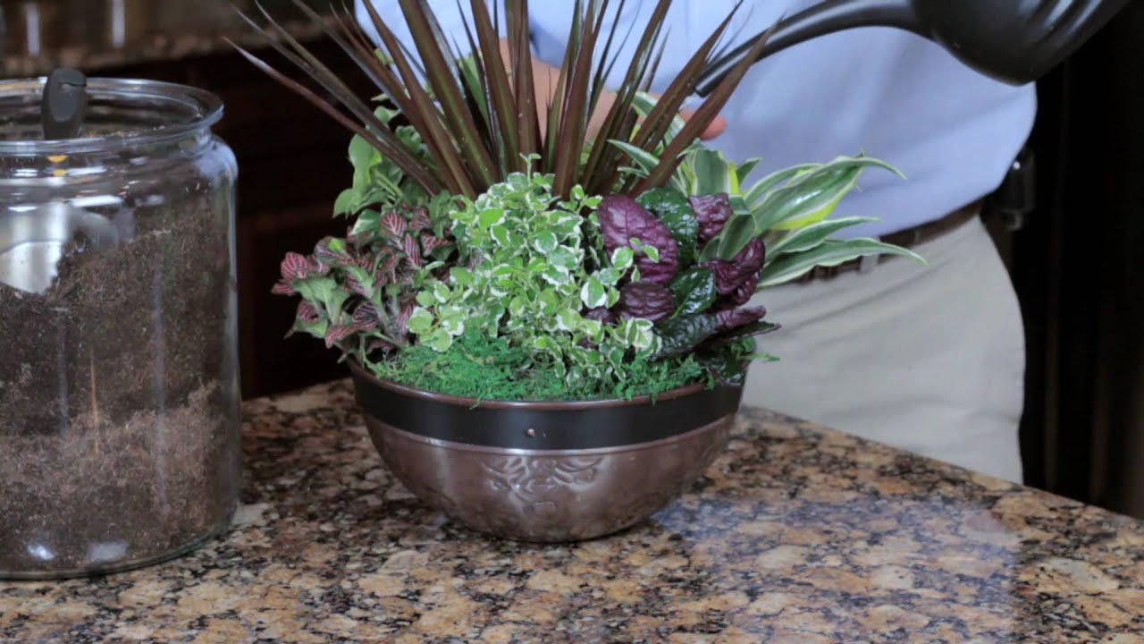 Exotic angel plants how to create an indoor container - How to make a container garden ...