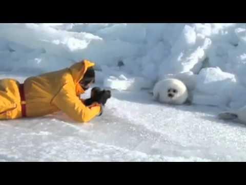 Parry Gripp - Lazy Harp Seal Has No Job