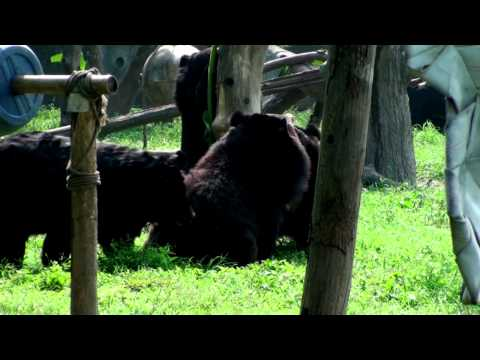 China: Moon Bear Rescue Centre, Chengdu with Jill Robinson. Part Two