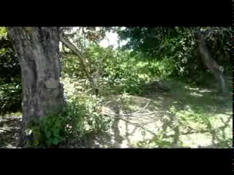 Rvores de Lei s�o derrubadas no Cerrado do Piau
