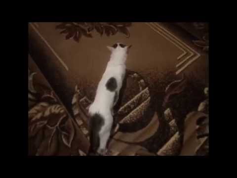 Кошачья -- Серенада