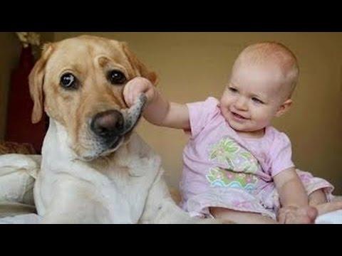 Bebes Riendose a Carcajadas Con Sus Perros - Videos De Risa De Bebes Y Perros
