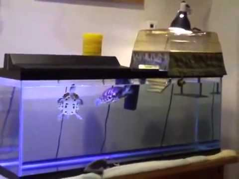 Turtle Topper Above-Tank Basking Platform