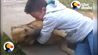 Boy Reunited with Lost Dog | The Dodo