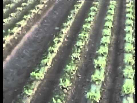 Αγροτικά μηχανήματα για βότανα και ειδικές καλλιέργειες