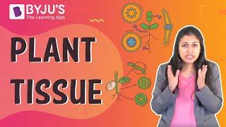 Tissues 02 - Plant Tissues