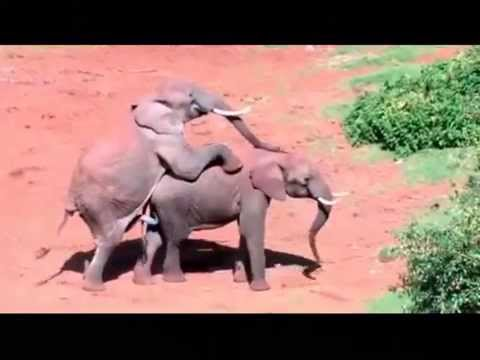 Funny Animals Sex Fail Compilation video
