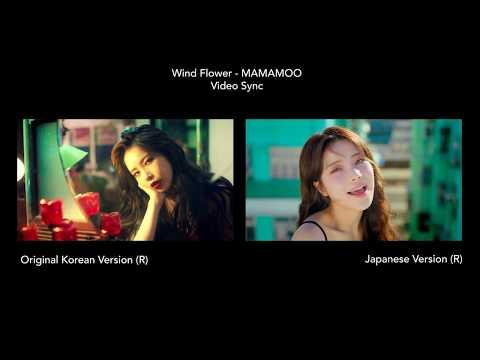 Download Wind Flower JP/KR Ver - MAMAMOO  COMPARISON Mp4 baru
