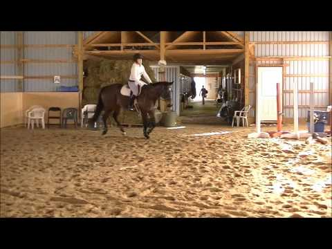 16.2 TB gelding 4TH in both Adult Amateur Training Hunter and Adult Amateur ...