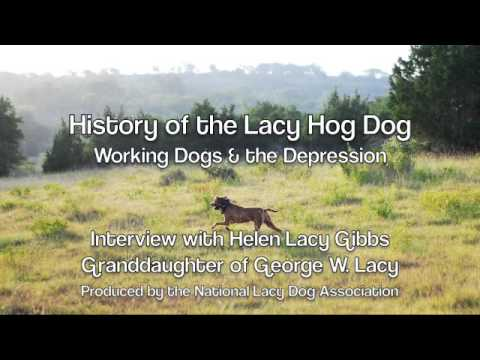 Helen Lacy Gibbs - Working Lacy Hog Dogs Video