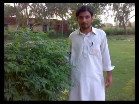 UET Peshawar (Campus-III Bannu) CE Batch Five Students Video.mp4