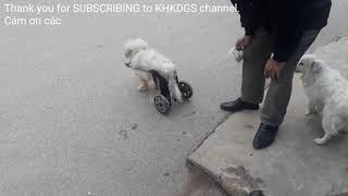 chú chó đi bằng xe lăn|video cho be|clip cho be|funny kids|kids songs|nhạc tiếng anh cho bé|Tom Tyt