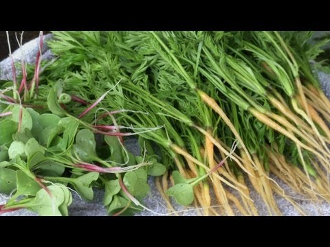 Growing Micro Greens and Organic Produce for Restaurants