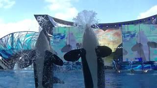 Frolic goes wrong (Full Shamu Show) - Jan 23, 2018 - SeaWorld Orlando
