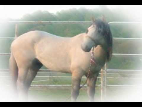 Argo, Kiger Mustang Video