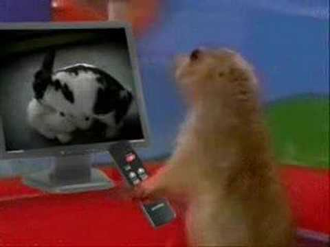 Drama Prairie Dog- Curses !!!!