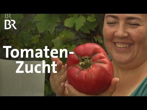 Irina und ihre Tomaten: Süß und saftig | Zwischen Spessart und Karwendel | BR Fernsehen