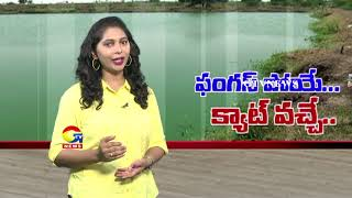 Special Report on Dangerous CAT FISH Farming