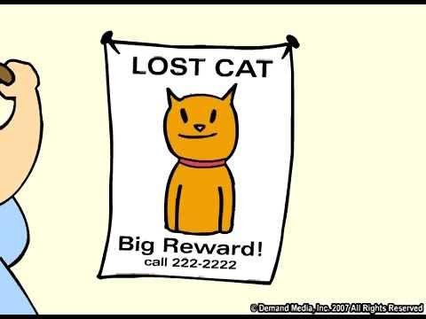 youtube   the lost cat funny cartoon   youtube