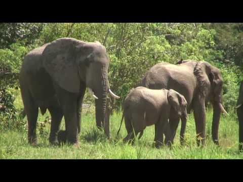 アフリカ・サファリ(ウガンダ・マーチソンフォール国立公園)