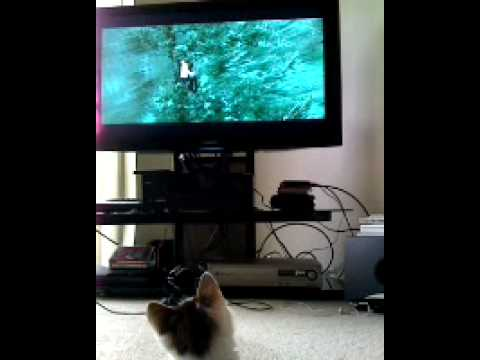 Robert Pattinson And Kristen Stewart Cute. lol! cute kitten watching