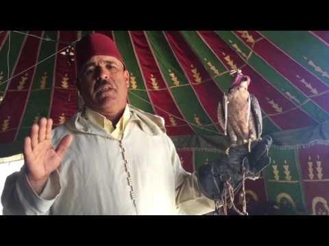 تربية الصقور بالمغرب