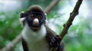 කථා කරන සත්තු දැකලා තියෙනවද? එන්න බලන්න.. ෂෙයාර් කරන්න ANIMAL CRACKERS (The Best of BBC One's Walk O