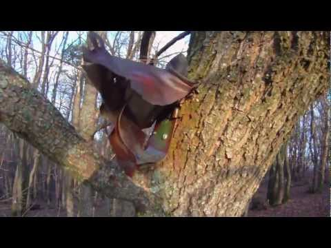 geocaching : nice hide on tree Video